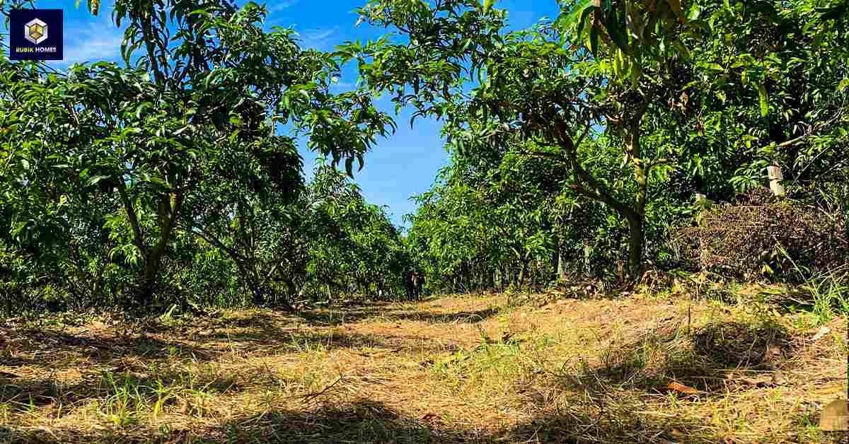 Đất vườn trồng cây lâu năm trong sản xuất nông nghiệp