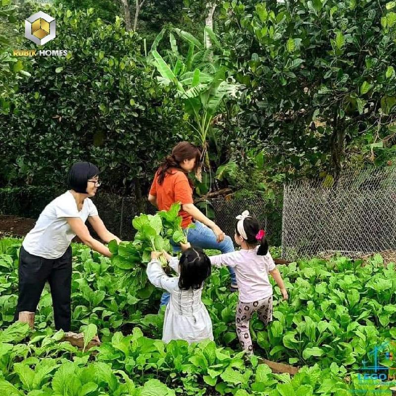 Đầu tư đất vườn